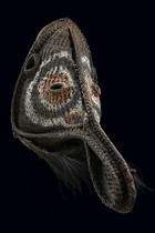 "Big wickerwork mask ""didagur"", Papua New Guinea - Middle Sepik"